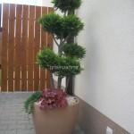 ogród (19)