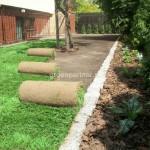 ogród (3)