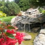 ogród (65)
